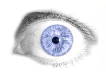 蓝眼睛人力查出的照片 免版税库存照片