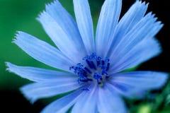 蓝色光华 库存图片