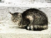 猫342 免版税库存照片