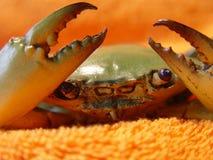 螃蟹详述绿色龙虾 库存照片