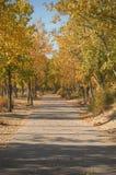 被铺的秋天路 库存图片