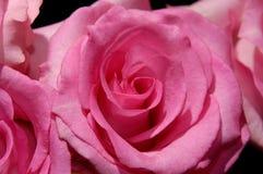 35朵花 库存照片