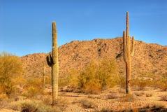 35片沙漠柱仙人掌 免版税库存照片
