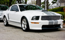 350 2009 shelby ford gt Arkivfoton