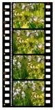 35mm彩色片电影 库存图片