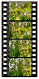 35mm color movie film. 2D digital art Stock Images