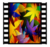 35mm slide. 35mm film frame,Digital art Royalty Free Stock Photo