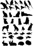 36个宠物剪影向量 免版税图库摄影