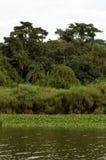 36坦桑尼亚 图库摄影