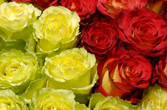 36朵花 免版税库存图片
