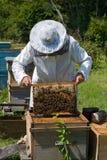 36蜂农 图库摄影