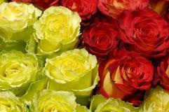 36 kwiatów Obraz Royalty Free