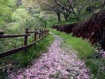 路径春天 库存图片