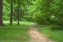 路径森林 免版税图库摄影