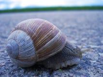 路蜗牛 库存照片