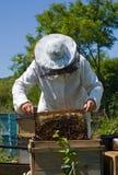 37蜂农 库存照片