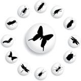 37 установленных насекомых кнопок b Стоковая Фотография
