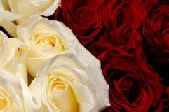 37 цветков Стоковое Изображение