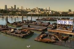39个码头密封 免版税图库摄影