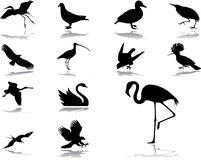 39 установленных икон птиц Стоковое фото RF