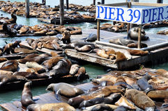 39头狮子码头海运 库存照片