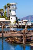 旧金山码头39灯塔和封印加利福尼亚 免版税库存图片