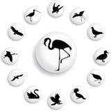 39 b ptaków guzików ustawiających Zdjęcie Royalty Free