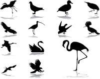 39 inställda fågelsymboler Royaltyfri Foto