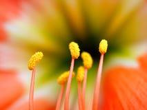 39 kwiat Obraz Stock