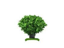 3d大灌木回报 库存图片