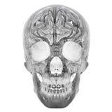 3D玻璃水晶头骨 图库摄影