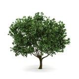 3d结构树 库存图片