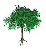 3d绿色结构树 库存例证