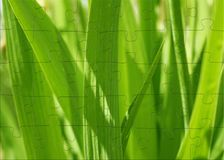 3d草绿色图象困惑春天 免版税库存照片