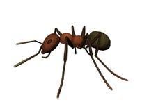 3D蚂蚁的例证 免版税库存照片