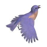3d西部鸟蓝鸫女性的翻译 库存图片