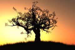 3d сиротливые представляют вал захода солнца восхода солнца Стоковые Фотографии RF