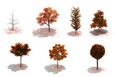 3d autumn trees pack with shadows Stock Images