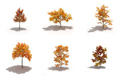 3d autumn trees pack with shadows Royalty Free Stock Photo
