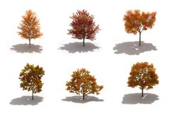 3d autumn trees pack with shadows. 3d autumn trees pack on white with ground shadows Stock Photo
