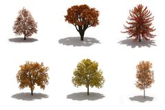 3d autumn trees pack with shadows. 3d autumn trees pack on white with ground shadows Royalty Free Stock Images