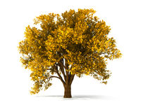 3d autumnal tree. Isolated autumnal tree with yellow foliage vector illustration