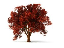 3d autumnal tree. Isolated autumnal tree with red foliage vector illustration