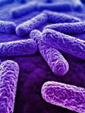 3d bacteriën Stock Afbeelding