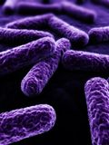 3d bacteria. 3d rendered close up of isolated bacteria Royalty Free Stock Image