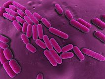 3d bacteria. 3d rendered close up of some isolated rod shaped bacteria Royalty Free Stock Image