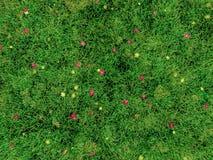 3D beeld van gras en kleine bloemen Royalty-vrije Stock Afbeelding