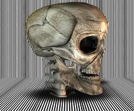 3D big realistic skull. On stripes background Stock Image