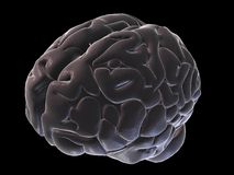 3d brain Royalty Free Stock Images