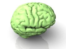3d brain. An illustration of a 3d brain of a human Stock Images